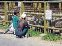 小動物とのふれあい事業1